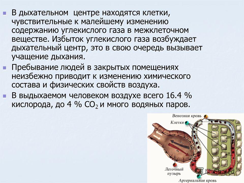 В дыхательном центре находятся клетки, чувствительные к малейшему изменению содержанию углекислого газа в межклеточном веществе. Избыток углекислого газа возбуждает дыхательный центр, это в свою очередь вызывает учащение дыхания. В дыхательном центре
