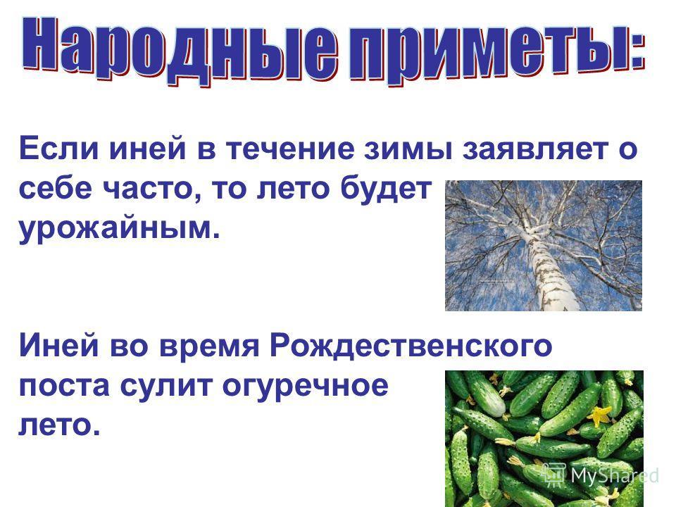 Если иней в течение зимы заявляет о себе часто, то лето будет урожайным. Иней во время Рождественского поста сулит огуречное лето.