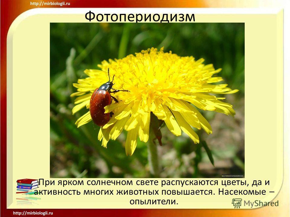 Фотопериодизм При ярком солнечном свете распускаются цветы, да и активность многих животных повышается. Насекомые – опылители.