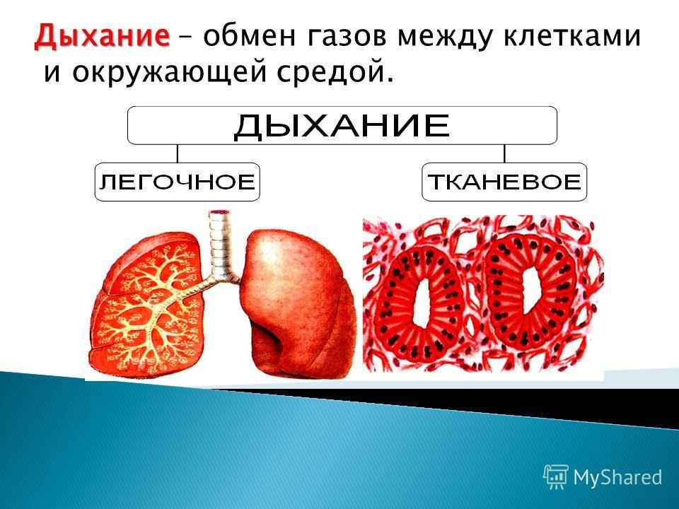 Дыхание Дыхание – обмен газов между клетками и окружающей средой.
