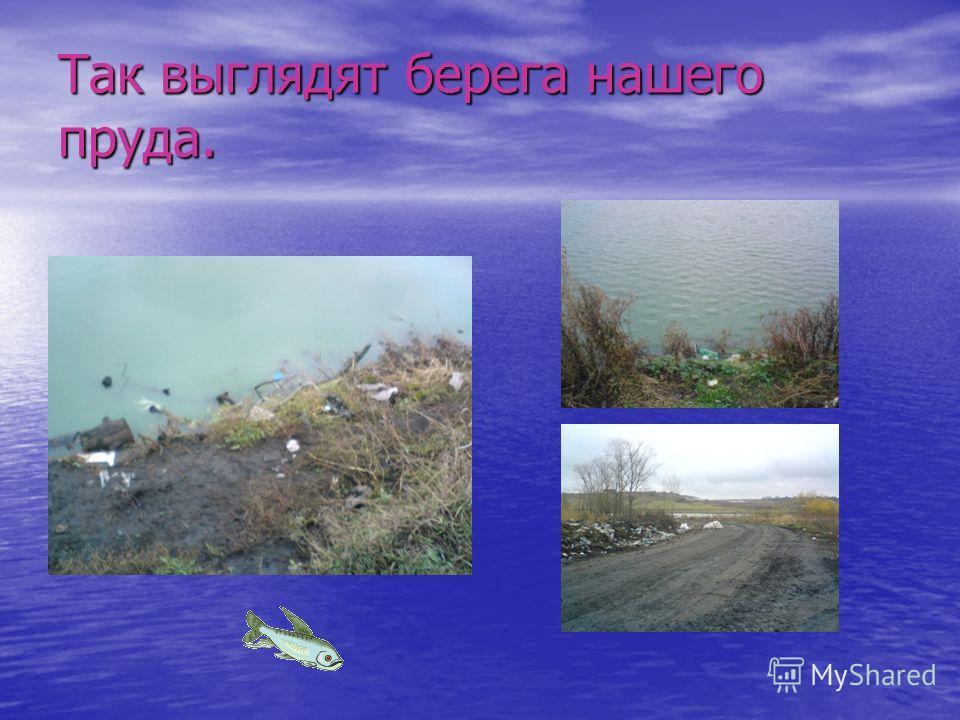 Так выглядят берега нашего пруда.