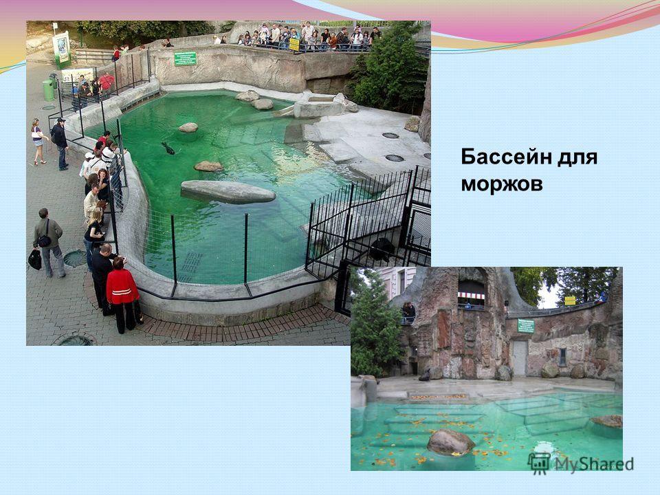 Бассейн для моржов