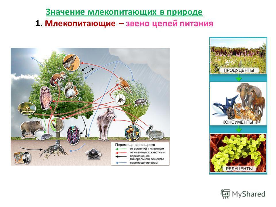 Задание 2 «Значение класса Млекопитающие» Задание 1-ой команде: Какова роль млекопитающих в природе? Задание 2-ой команде: Каково отрицательное значение млекопитающих в жизни человека? Задание 3-ей команды: Нужны ли человеку млекопитающие?