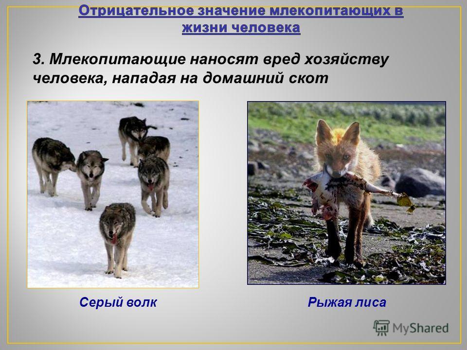 1. Млекопитающие наносят вред культурным растениям и уничтожают запасы продовольствия 2. Млекопитающие распространяют заболевания