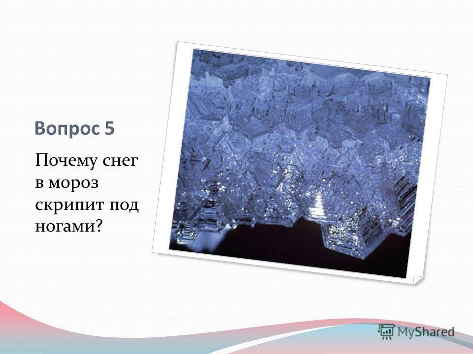 Вопрос 5 Почему снег в мороз скрипит под ногами?