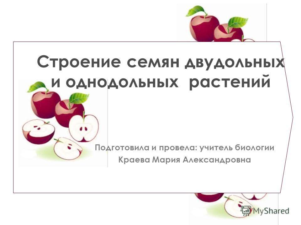 Строение семян двудольных и однодольных растений Подготовила и провела: учитель биологии Краева Мария Александровна