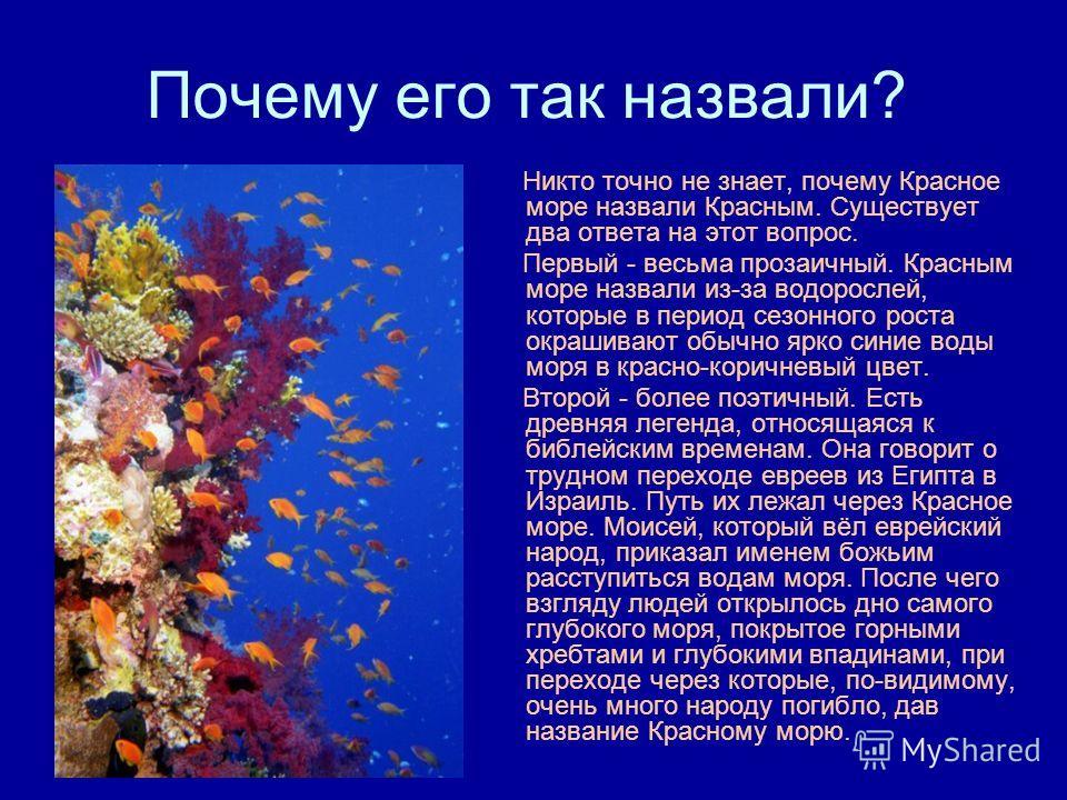 Почему его так назвали? Никто точно не знает, почему Красное море назвали Красным. Существует два ответа на этот вопрос. Первый - весьма прозаичный. Красным море назвали из-за водорослей, которые в период сезонного роста окрашивают обычно ярко синие