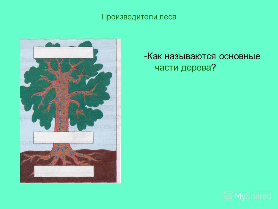 Производители леса -Как называются основные части дерева?