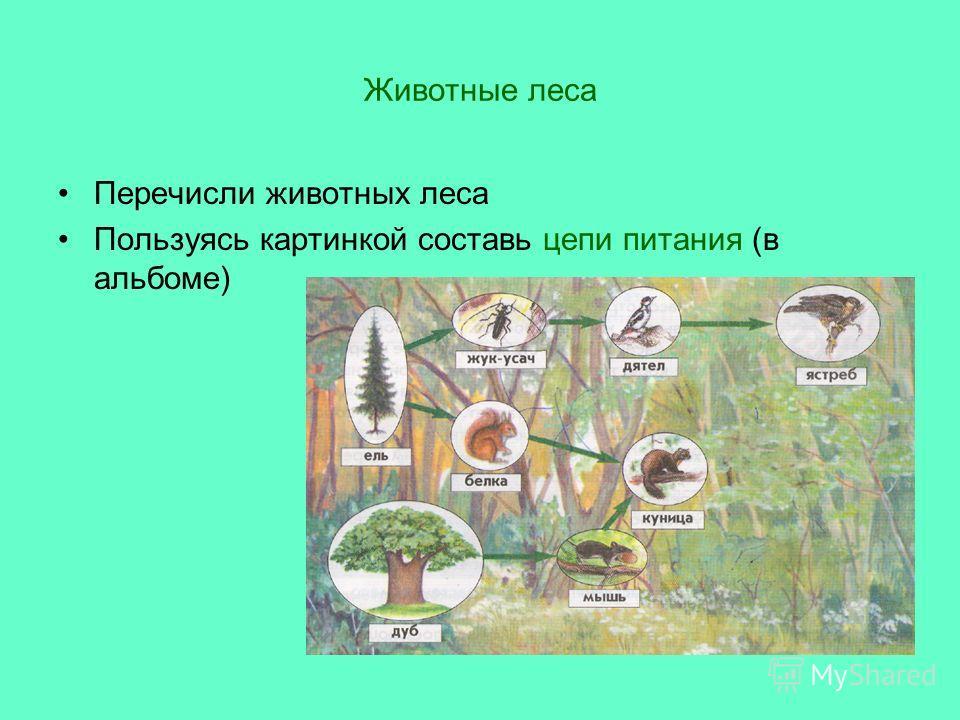 Животные леса Перечисли животных леса Пользуясь картинкой составь цепи питания (в альбоме)