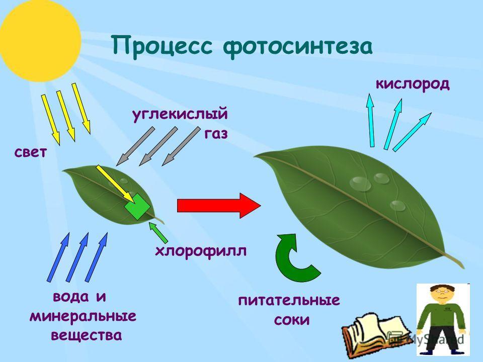Процесс фотосинтеза углекислый газ свет вода и минеральные вещества кислород питательные соки хлорофилл