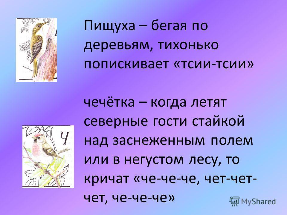 Пищуха – бегая по деревьям, тихонько попискивает «тсии-тсии» чечётка – когда летят северные гости стайкой над заснеженным полем или в негустом лесу, то кричат «че-че-че, чет-чет- чет, че-че-че»