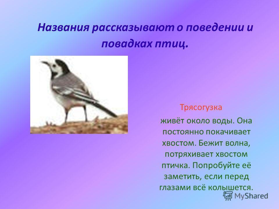 Названия рассказывают о поведении и повадках птиц. Трясогузка живёт около воды. Она постоянно покачивает хвостом. Бежит волна, потряхивает хвостом птичка. Попробуйте её заметить, если перед глазами всё колышется.