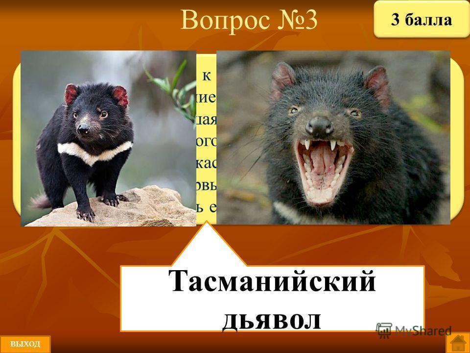 Вопрос 3 Этот зверь относится к семейству хищных сумчатых. Его латинское название означает «любитель плоти». Тухлая и разложившаяся еда - главный показатель вкусной пищи для этого необычного животного. Вид свирепого зверька, ужасный запах и жуткий гр