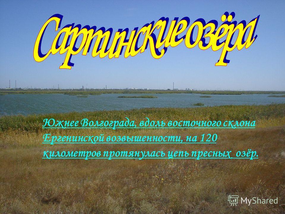 Южнее Волгограда, вдоль восточного склона Ергенинской возвышенности, на 120 километров протянулась цепь пресных озёр.