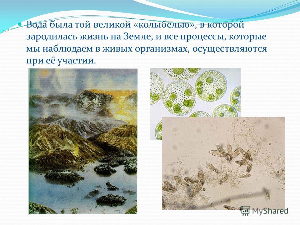 Вода была той великой «колыбелью», в которой зародилась жизнь на Земле, и все процессы, которые мы наблюдаем в живых организмах, осуществляются при её участии.