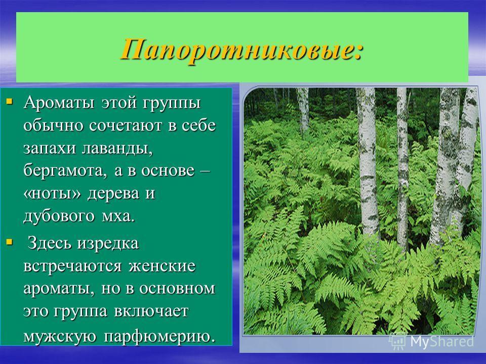 Папоротниковые: Ароматы этой группы обычно сочетают в себе запахи лаванды, бергамота, а в основе – «ноты» дерева и дубового мха. Ароматы этой группы обычно сочетают в себе запахи лаванды, бергамота, а в основе – «ноты» дерева и дубового мха. Здесь из