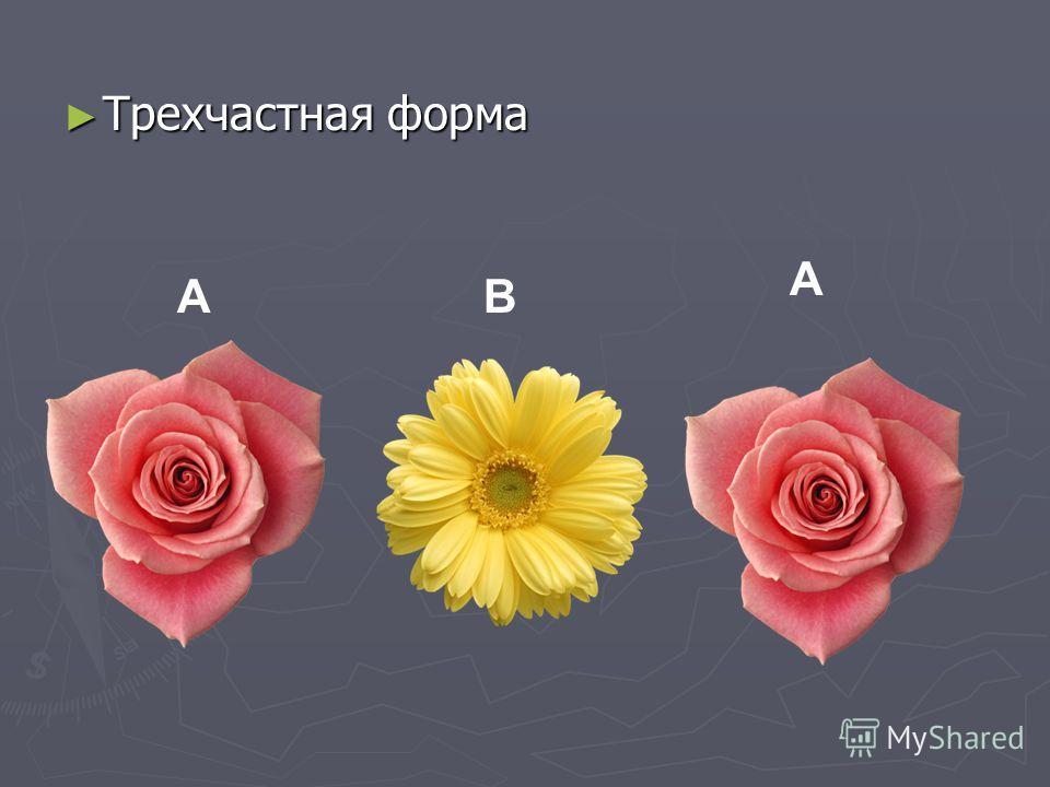 Трехчастная форма Трехчастная форма AB A