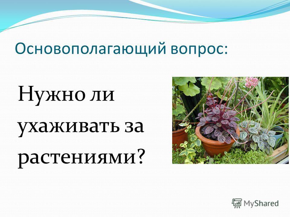 Основополагающий вопрос: Нужно ли ухаживать за растениями?