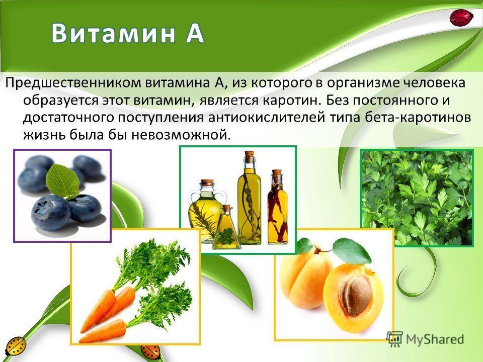 Предшественником витамина А, из которого в организме человека образуется этот витамин, является каротин. Без постоянного и достаточного поступления антиокислителей типа бета-каротинов жизнь была бы невозможной.
