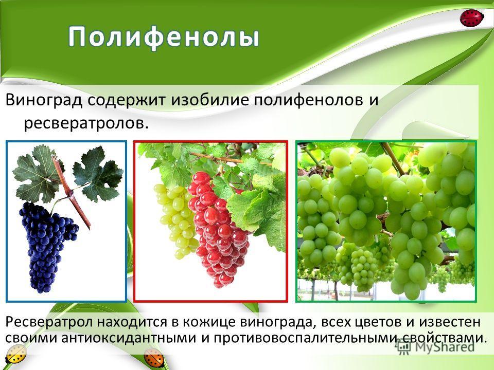 Виноград содержит изобилие полифенолов и ресвератролов. Ресвератрол находится в кожице винограда, всех цветов и известен своими антиоксидантными и противовоспалительными свойствами.