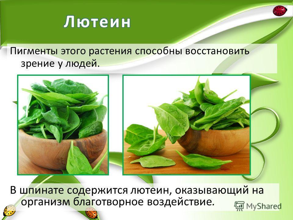 В шпинате содержится лютеин, оказывающий на организм благотворное воздействие. Пигменты этого растения способны восстановить зрение у людей.