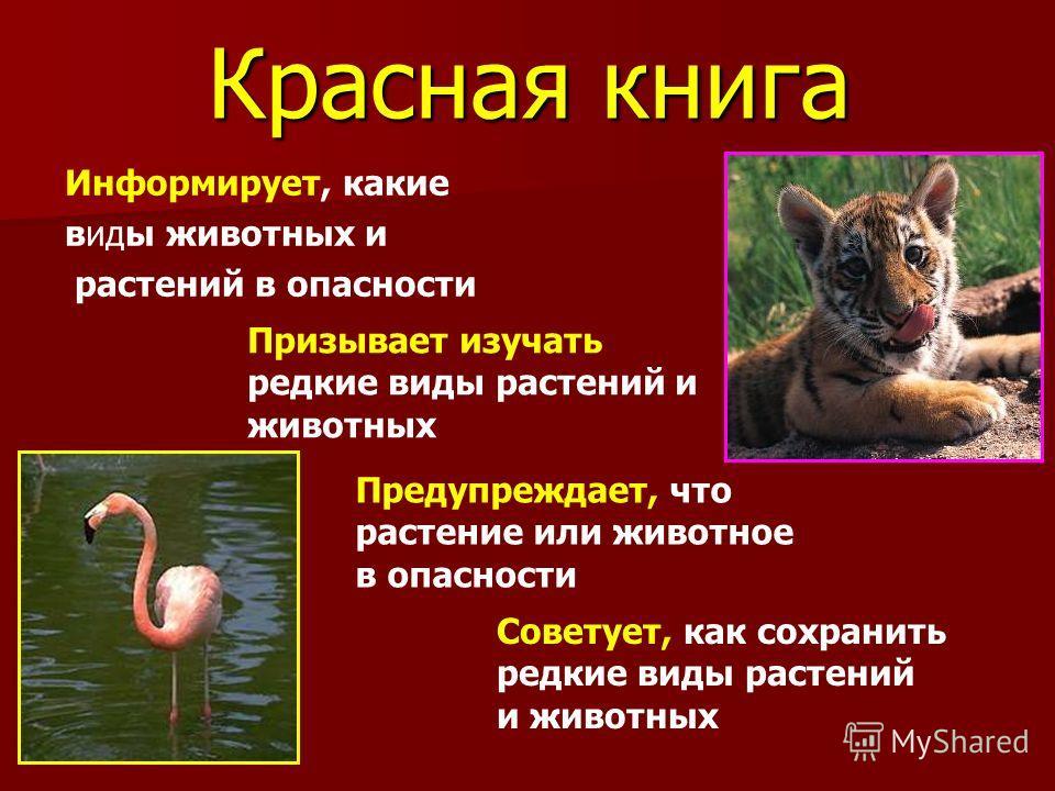 Скачать красная книга россии животные и растения