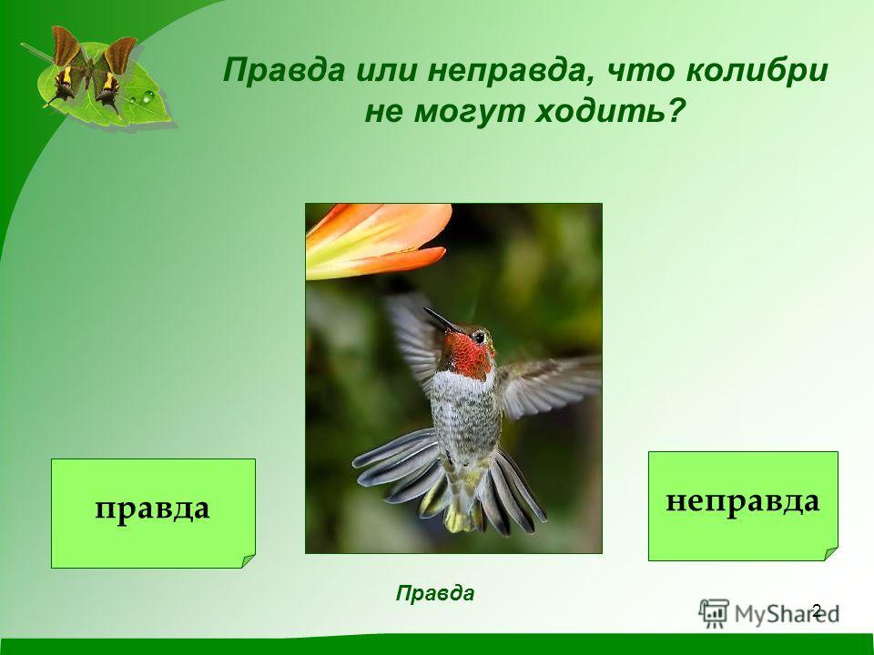 1 © ГОУ ЯО школа-интернат 4 2010 г