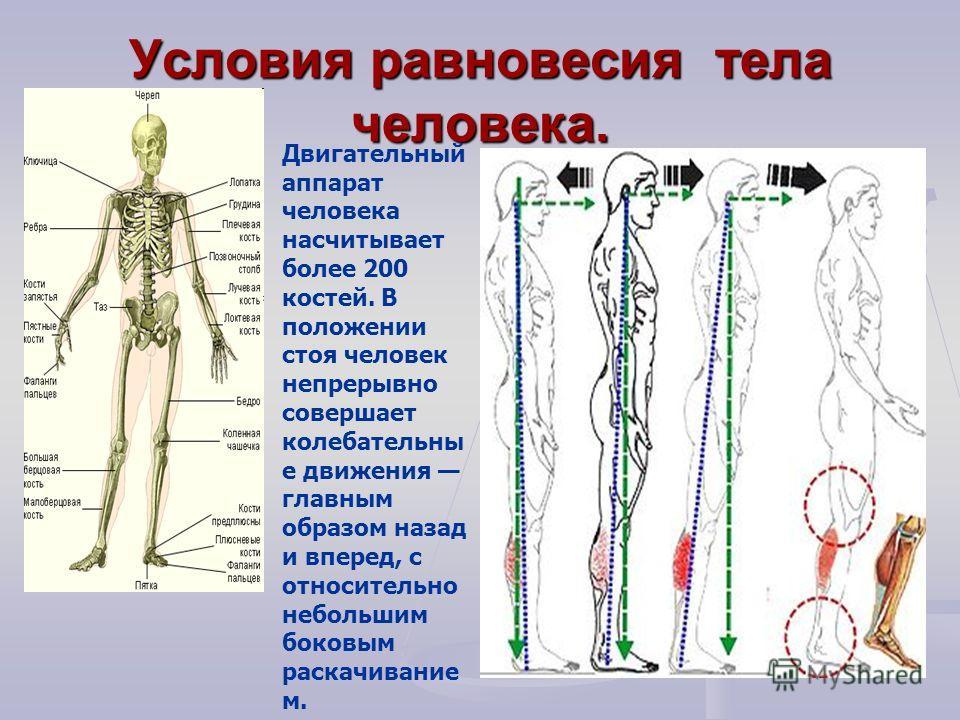 Условия равновесия тела человека. Двигательный аппарат человека насчитывает более 200 костей. В положении стоя человек непрерывно совершает колебательны е движения главным образом назад и вперед, с относительно небольшим боковым раскачивание м.