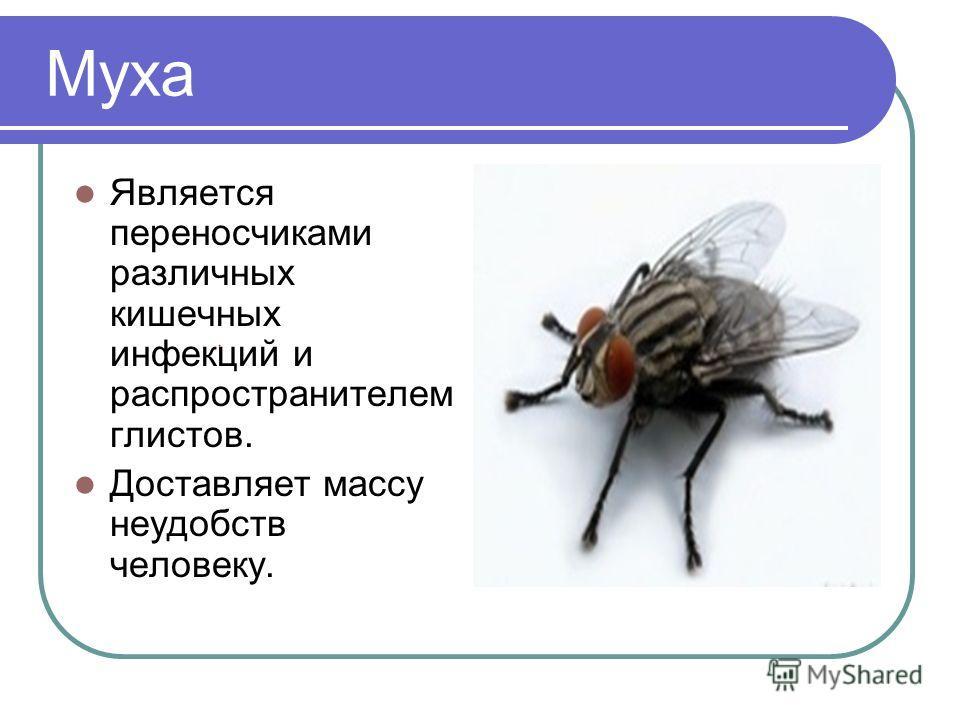 Муха Является переносчиками различных кишечных инфекций и распространителем глистов. Доставляет массу неудобств человеку.
