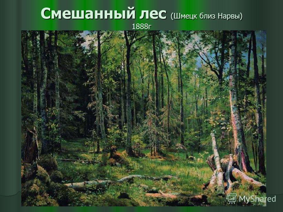 Смешанный лес (Шмецк близ Нарвы) 1888г