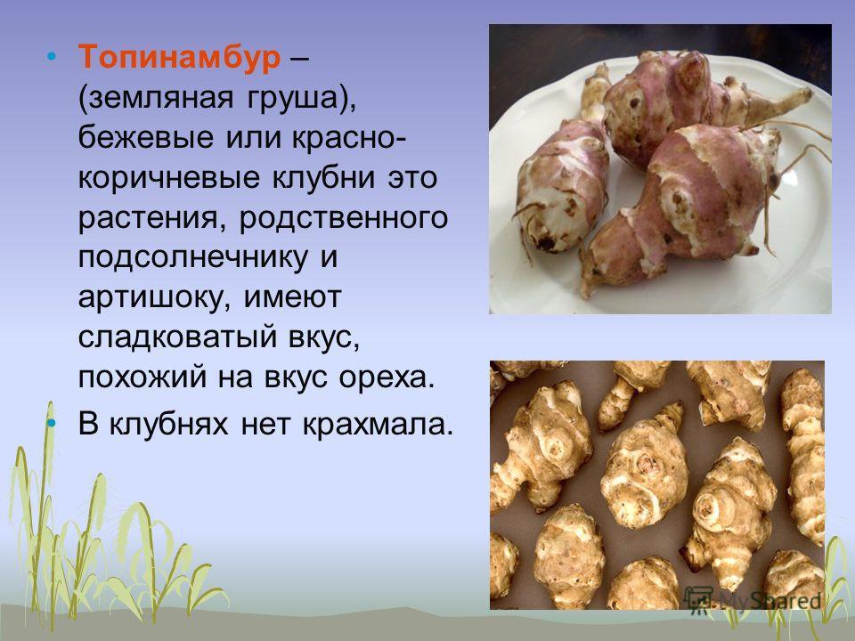 Топинамбур – (земляная груша), бежевые или красно- коричневые клубни это растения, родственного подсолнечнику и артишоку, имеют сладковатый вкус, похожий на вкус ореха. В клубнях нет крахмала.