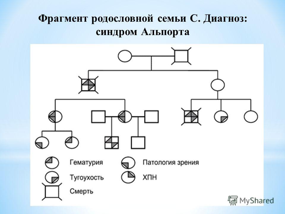 Фрагмент родословной семьи С. Диагноз: синдром Альпорта