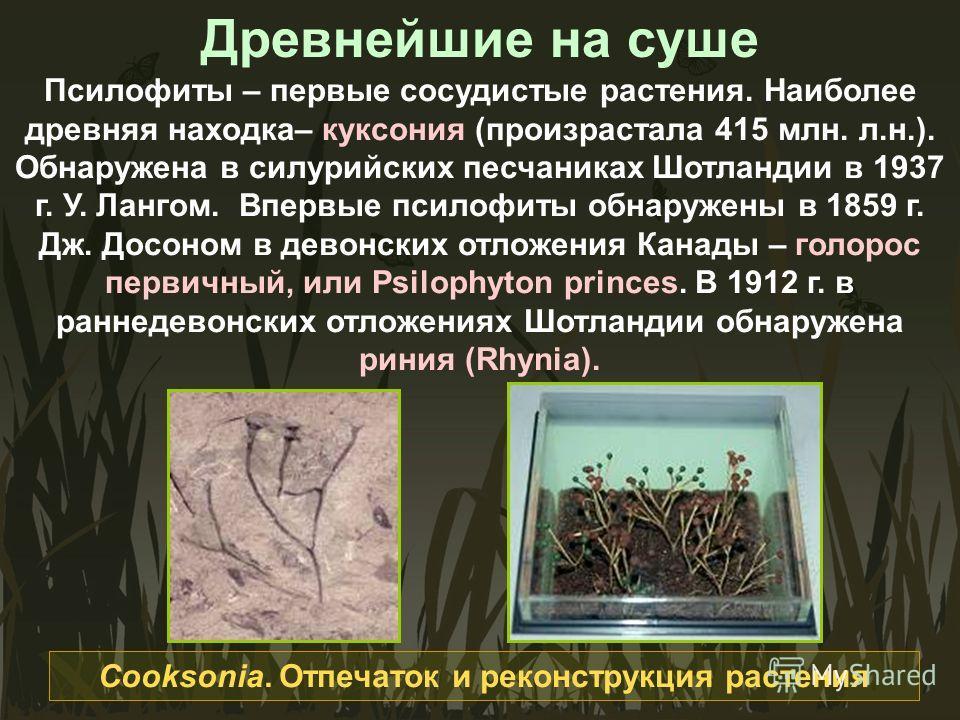 Древнейшие на суше Псилофиты – первые сосудистые растения. Наиболее древняя находка– куксония (произрастала 415 млн. л.н.). Обнаружена в силурийских песчаниках Шотландии в 1937 г. У. Лангом. Впервые псилофиты обнаружены в 1859 г. Дж. Досоном в девонс