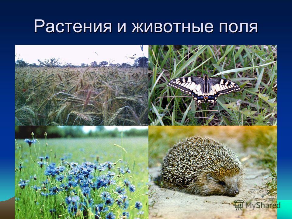 Растения и животные поля