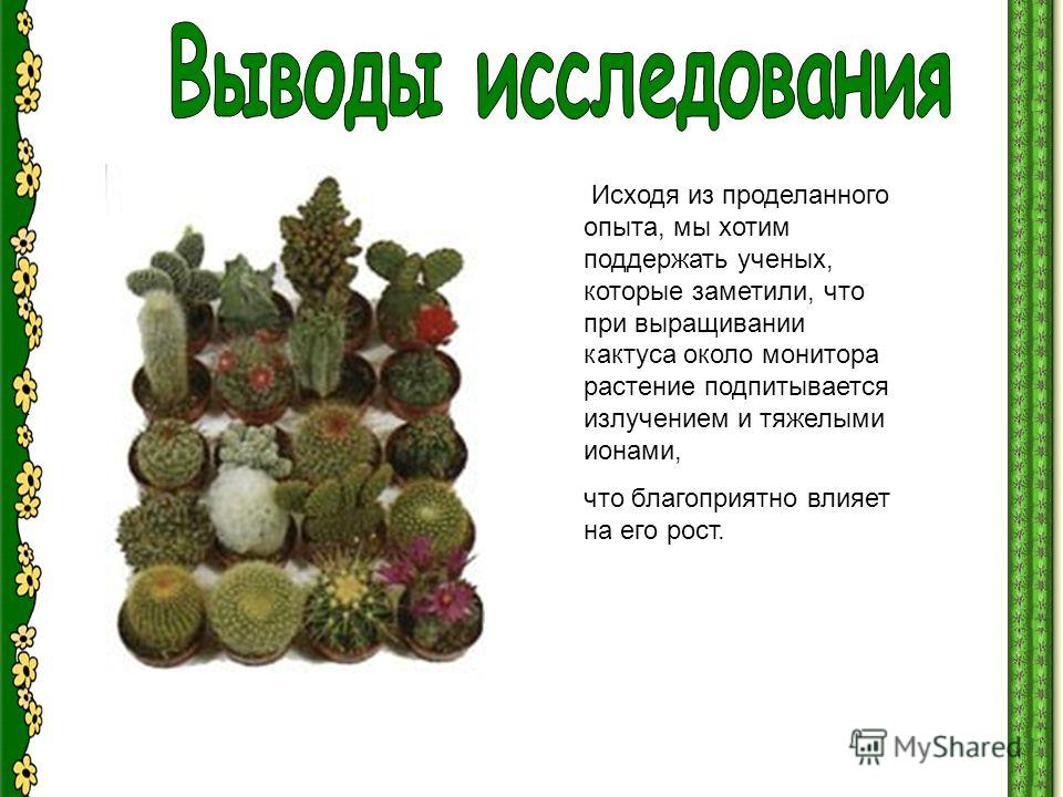 Исходя из проделанного опыта, мы хотим поддержать ученых, которые заметили, что при выращивании кактуса около монитора растение подпитывается излучением и тяжелыми ионами, что благоприятно влияет на его рост.