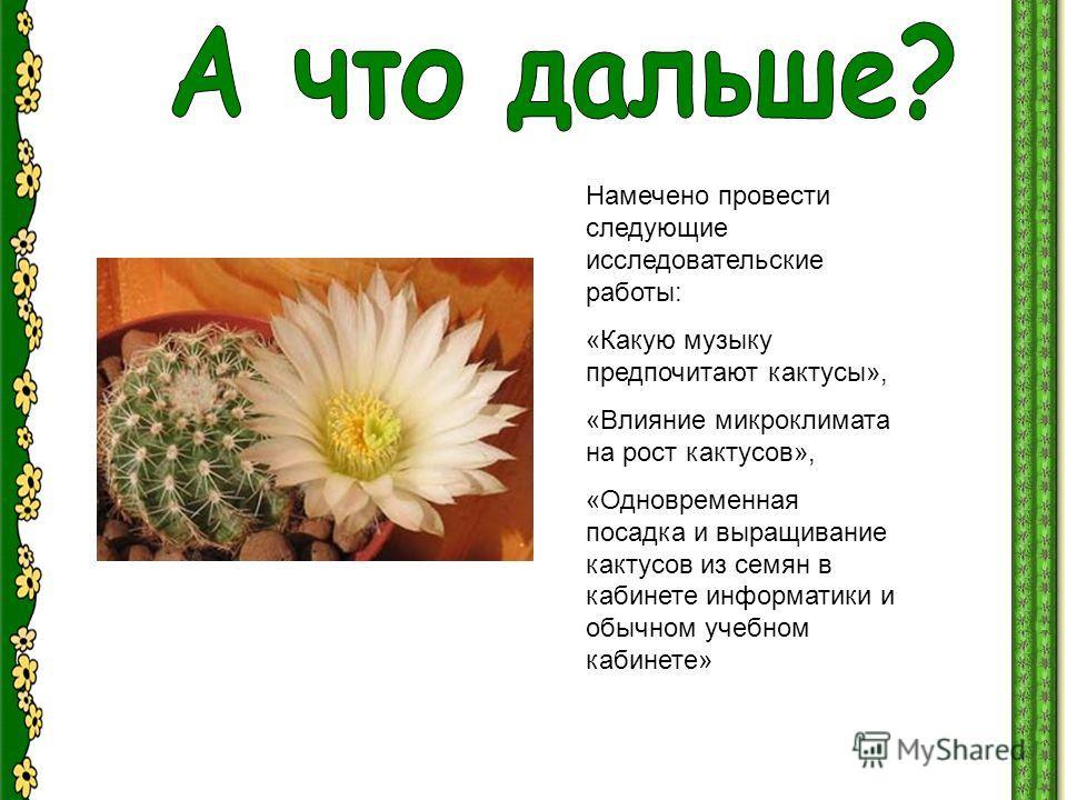Намечено провести следующие исследовательские работы: «Какую музыку предпочитают кактусы», «Влияние микроклимата на рост кактусов», «Одновременная посадка и выращивание кактусов из семян в кабинете информатики и обычном учебном кабинете»