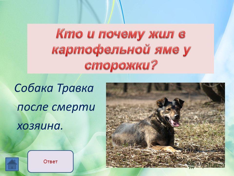 Собака Травка после смерти хозяина. Ответ