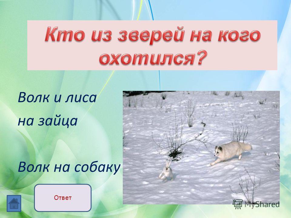 Волк и лиса на зайца Волк на собаку Ответ