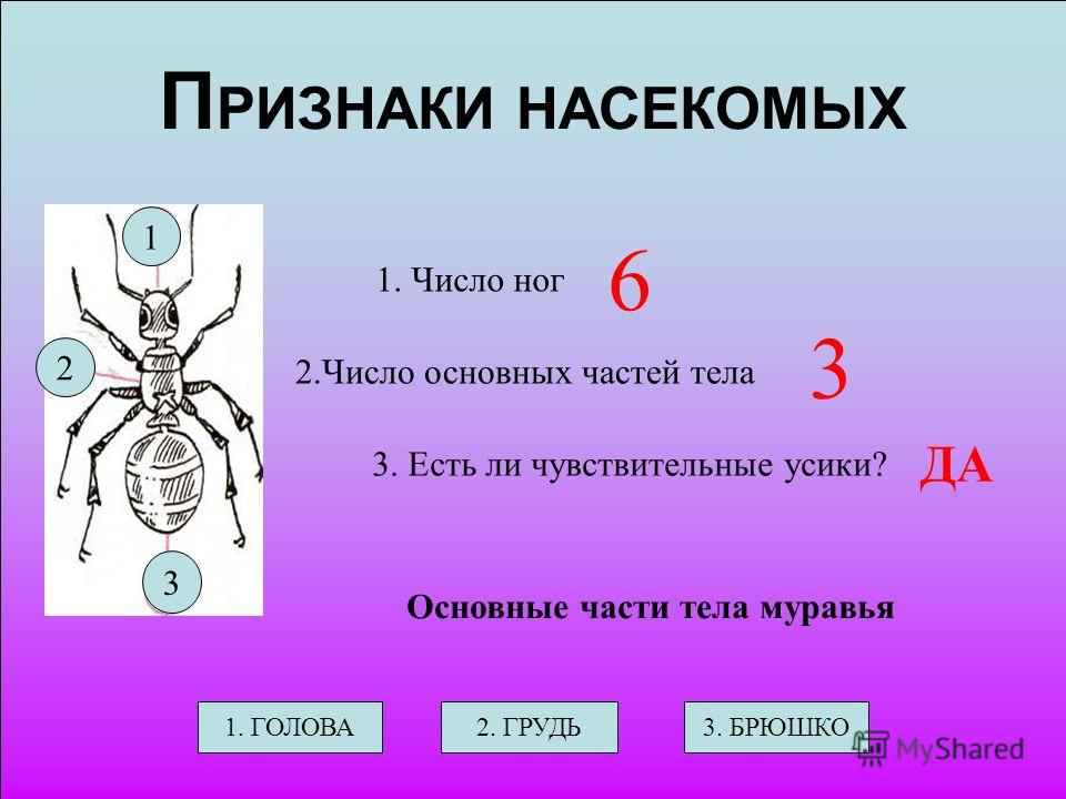 П РИЗНАКИ НАСЕКОМЫХ 1. Число ног 2.Число основных частей тела 3. Есть ли чувствительные усики? ? ? ? Основные части тела муравья 1. ГОЛОВА2. ГРУДЬ3. БРЮШКО 1 3 2