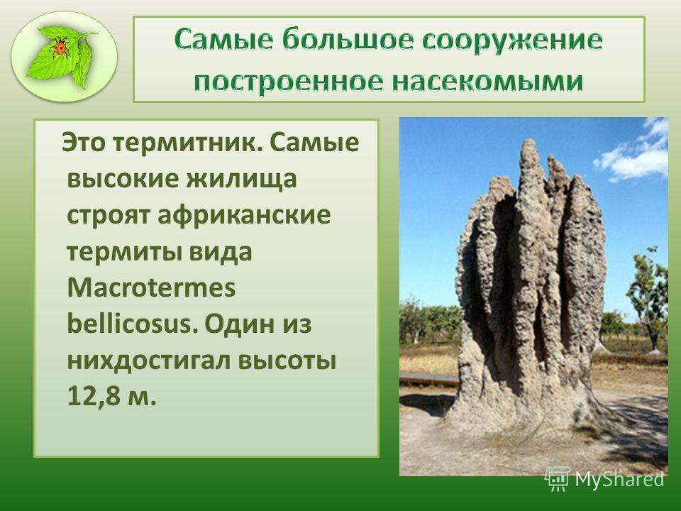 Это термитник. Самые высокие жилища строят африканские термиты вида Macrotermes bellicosus. Один из нихдостигал высоты 12,8 м.