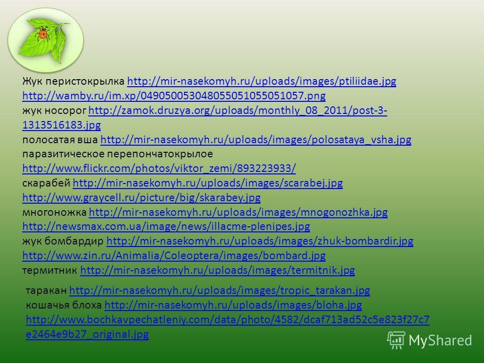 Жук перистокрылка http://mir-nasekomyh.ru/uploads/images/ptiliidae.jpghttp://mir-nasekomyh.ru/uploads/images/ptiliidae.jpg http://wamby.ru/im.xp/049050053048055051055051057.png жук носорог http://zamok.druzya.org/uploads/monthly_08_2011/post-3- 13135