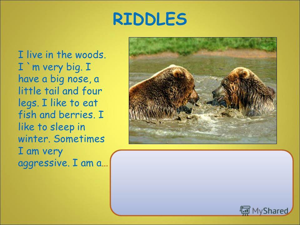 I live in the woods. I `m very big. I have a big nose, a little tail and four legs. I like to eat fish and berries. I like to sleep in winter. Sometimes I am very aggressive. I am a… RIDDLES