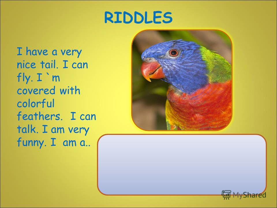 I have a very nice tail. I can fly. I `m covered with colorful feathers. I can talk. I am very funny. I am a.. RIDDLES
