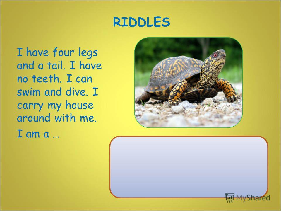 I have four legs and a tail. I have no teeth. I can swim and dive. I carry my house around with me. I am a … RIDDLES