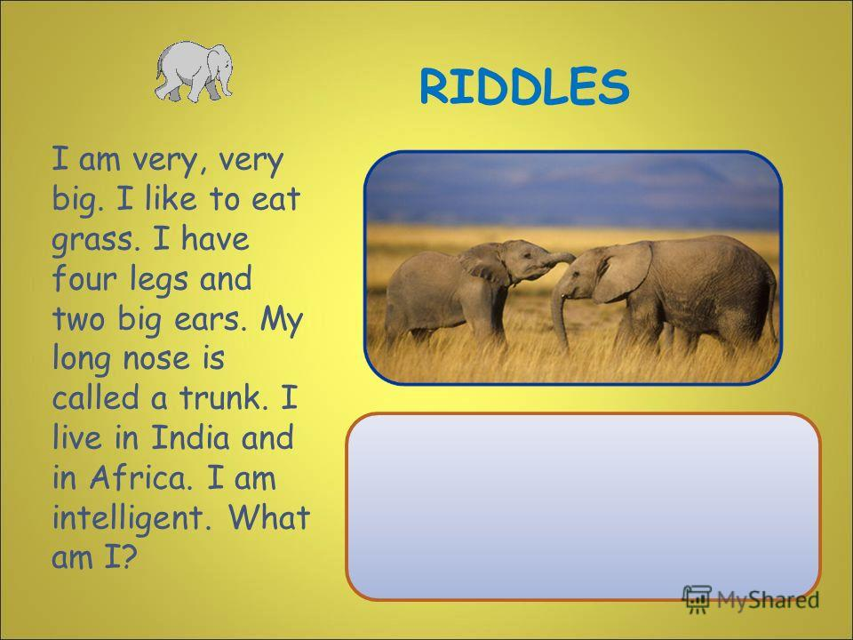 I am very, very big. I like to eat grass. I have four legs and two big ears. My long nose is called a trunk. I live in India and in Africa. I am intelligent. What am I? RIDDLES