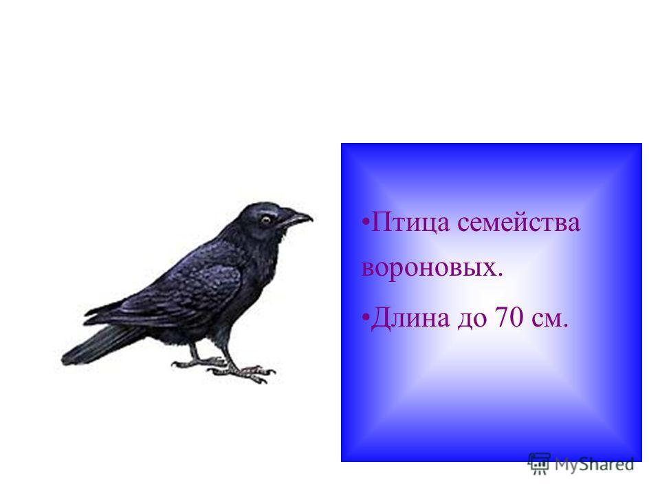 Птица семейства вороновых. Длина до 70 см.