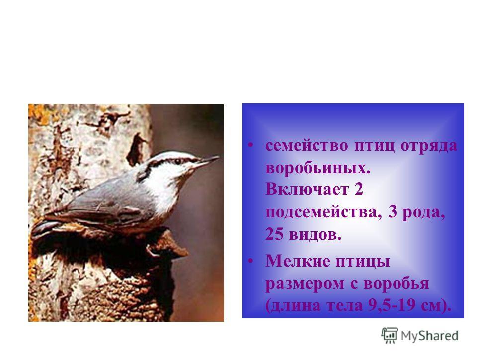 семейство птиц отряда воробьиных. Включает 2 подсемейства, 3 рода, 25 видов. Мелкие птицы размером с воробья (длина тела 9,5-19 см).