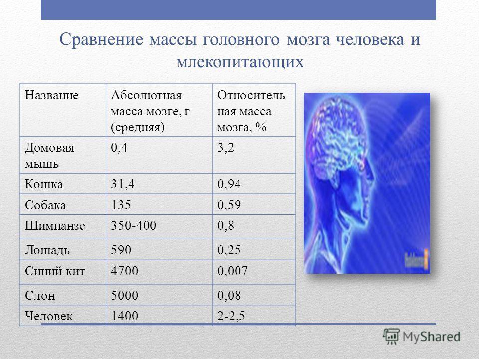 Сравнение массы головного мозга человека и млекопитающих НазваниеАбсолютная масса мозге, г (средняя) Относитель ная масса мозга, % Домовая мышь 0,43,2 Кошка31,40,94 Собака1350,59 Шимпанзе350-4000,8 Лошадь5900,25 Синий кит47000,007 Слон50000,08 Челове