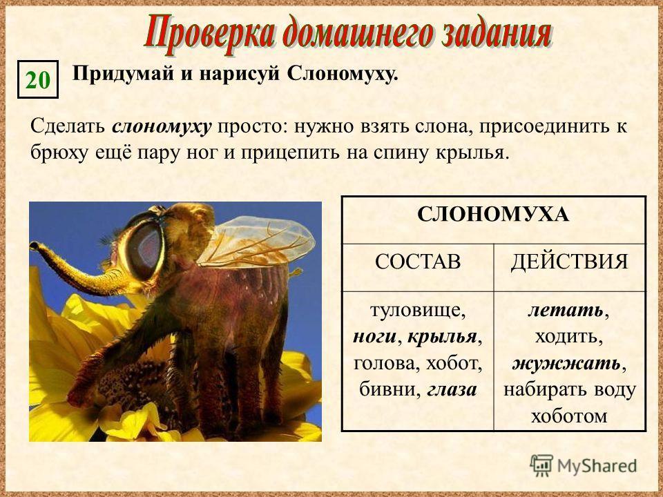 СЛОНОМУХА СОСТАВДЕЙСТВИЯ туловище, ноги, крылья, голова, хобот, бивни, глаза летать, ходить, жужжать, набирать воду хоботом Сделать слономуху просто: нужно взять слона, присоединить к брюху ещё пару ног и прицепить на спину крылья. Придумай и нарисуй