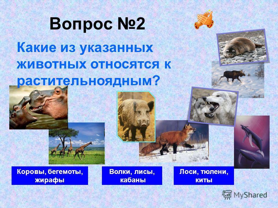 Вопрос 2 Коровы, бегемоты, жирафы Волки, лисы, кабаны Лоси, тюлени, киты Какие из указанных животных относятся к растительноядным?